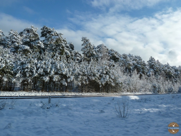 Karlshagener Wald im Schnee